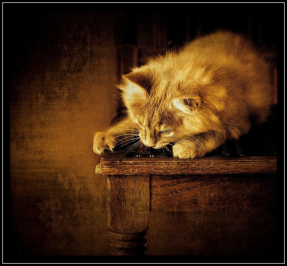 Sittin' kitten by Alan Mattison