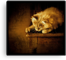 Sittin' kitten Canvas Print