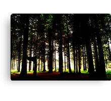 out of the woods... Canvas Print
