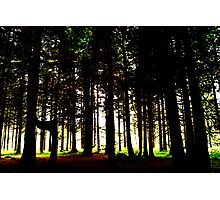 out of the woods... Photographic Print