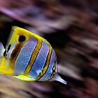 Stripey Fish by latitude54photo
