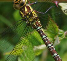 Welsh Dragonfly Sticker