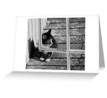 Alone and helpless Greeting Card