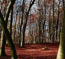Grass woods in Autumn by Rebecca Mason