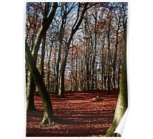 Grass woods in Autumn Poster