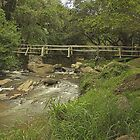 Bridge over the Umgeni by Peter Edwards