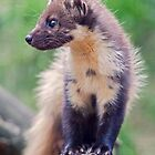 Those Magnificent Mustelids by Krys Bailey