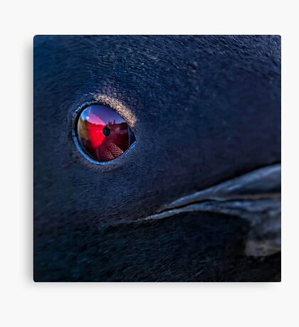A Loon's Eye View Canvas Print