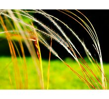 Lovely grass Photographic Print