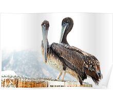 Morro Bay Pelicans Poster