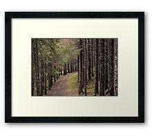 take a walk  Framed Print