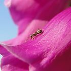 Anton the Ant On Foxglove by AH64D