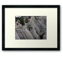Tree Of Stone Framed Print