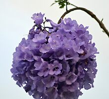 Ball of Jacaranda Flowers by TheaShutterbug
