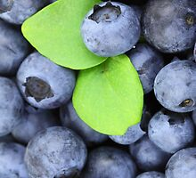 Blueberries by pjwuebker