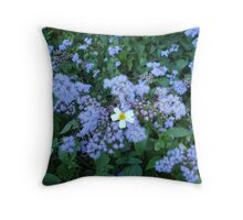Wild Ageratum and Bidens alba (He loves me, he loves me not) Throw Pillow