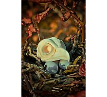 Morning, When All Good Things Are Born Photographic Print