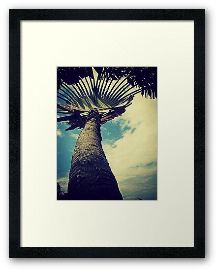 Singapore Palm by rebrebs