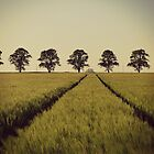 Summer Field by rebrebs