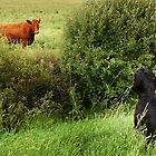 Dog and cow by Martin Harradine