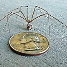 25¢ spider by hixpix