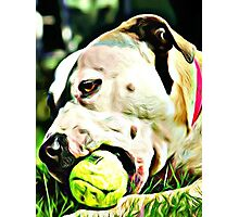 Pit Bull Rescue Beauty Photographic Print