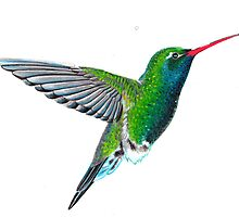 Hummingbird by gracejc