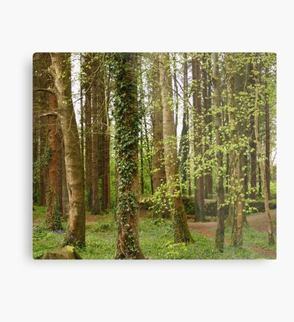 Forest, Stranorlar, Co. Donegal Metal Print