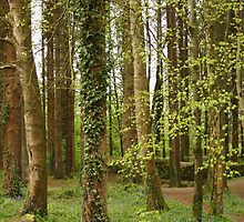 Forest, Stranorlar, Co. Donegal by Bernard McGlinchey