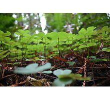 luckPatch Photographic Print