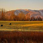 The fields of rolls by Tyler Olson