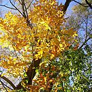 More Yellow Leaves by Shulie1