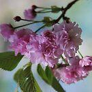 Blossom time by Julie Sherlock