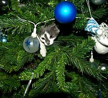 Kitten in a Christmas tree by DBigwood