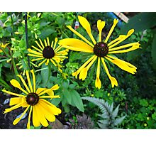 Roundabout Daisies Photographic Print