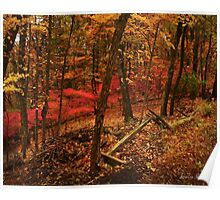 Pink in Autumn Poster