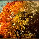 Autumn colors fade away © by Dawn M. Becker