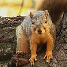 Squirrel At The Park by lorilee