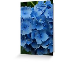 kathy's hydrangea, washington state.  iphone/samsung galaxy cover Greeting Card