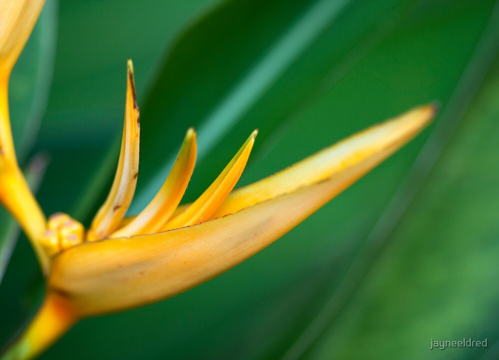 Yellow Lines on Soft Green Leaves by jayneeldred