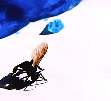 A Fly in the Ointment by Michael McCann