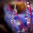 Wee Little Dew Drops by handyandypandy