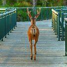 Deer Crossing by JamesA1