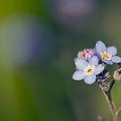 Soft Blue Days by Josie Eldred