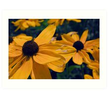 Black Eyed Susan Flowers Art Print