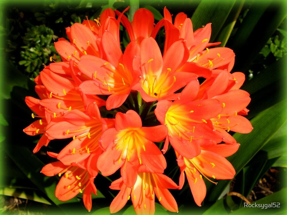 Burst of Orange by Rocksygal52