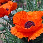 Poppy by Ruth Durose