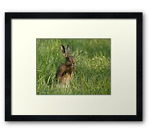 European Brown Hare Framed Print