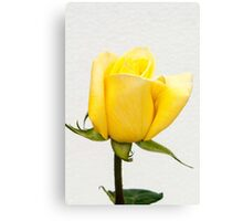 Yellow Rose Bud  - Gold Conquest  Canvas Print