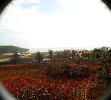 Osprey's eye view of Chappaquidick by Choux